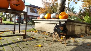 Dog Obedience Training Vancouver BC