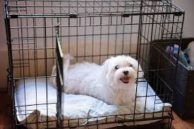 Crate Training Vancouver BC
